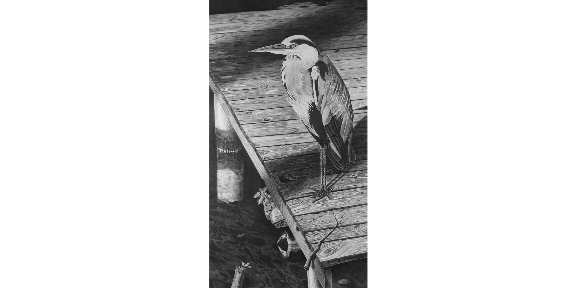 Fischreiher, Bleistift, 130x230 cm, 2016