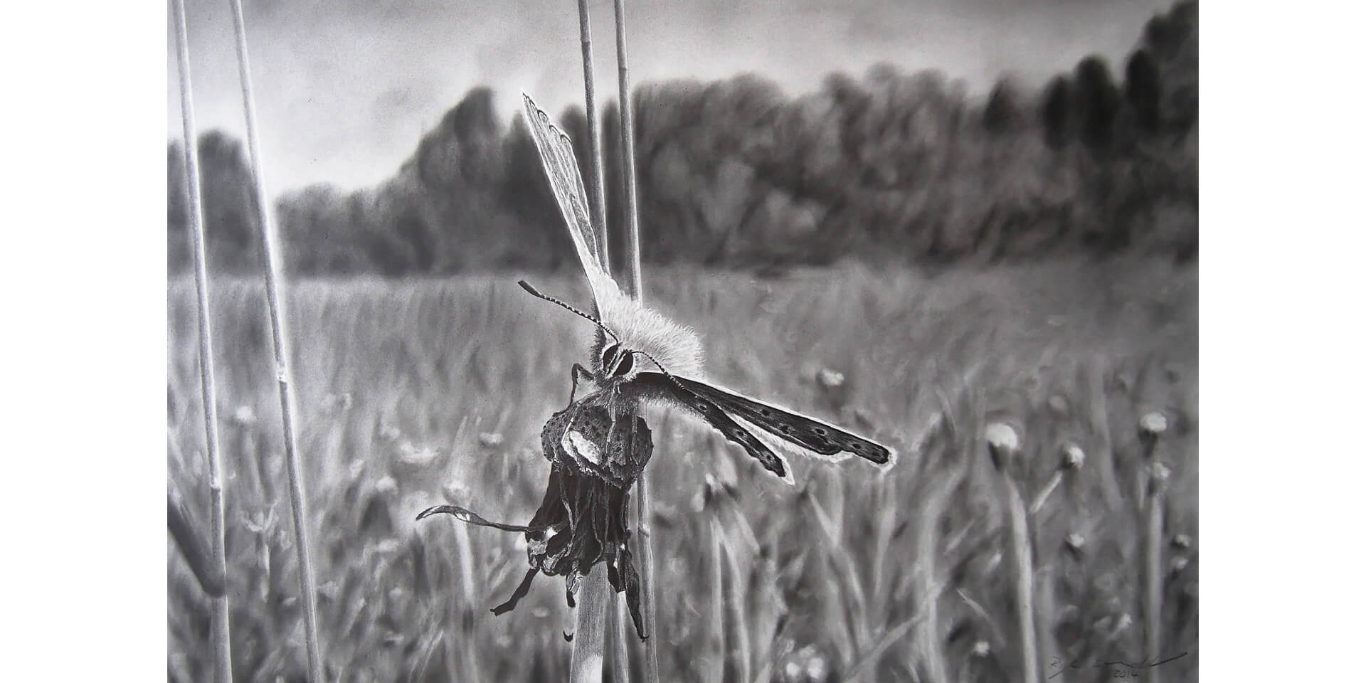 Gelandet, Bleistift, 46x68 cm, 2014
