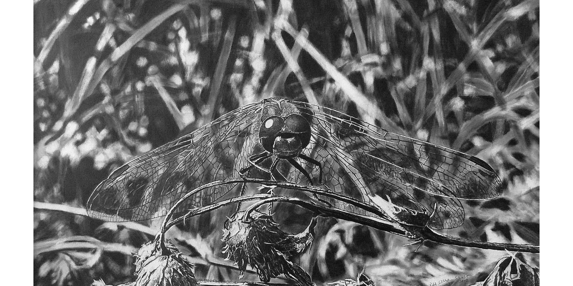 Libelle II, Bleistift, 44x73 cm, 2012