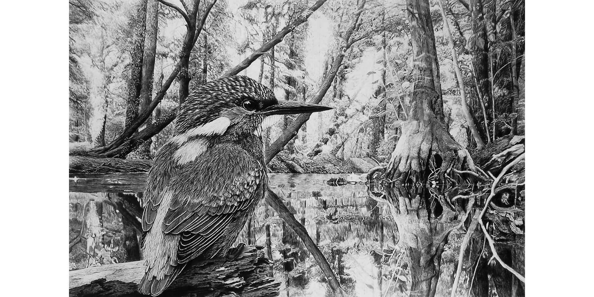 Young Kingfisher, Bleistift, 125x180 cm, 2013
