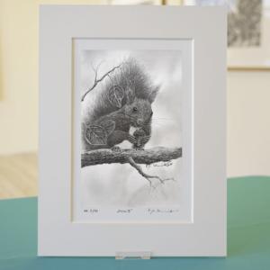 Bleistiftzeichnung Eichhörnchen
