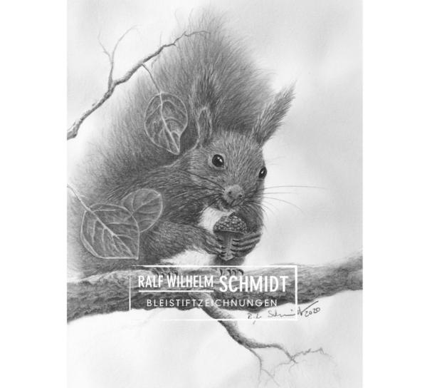 Eichhörnchen Zeichnung von Ralf Wilhelm Schmidt