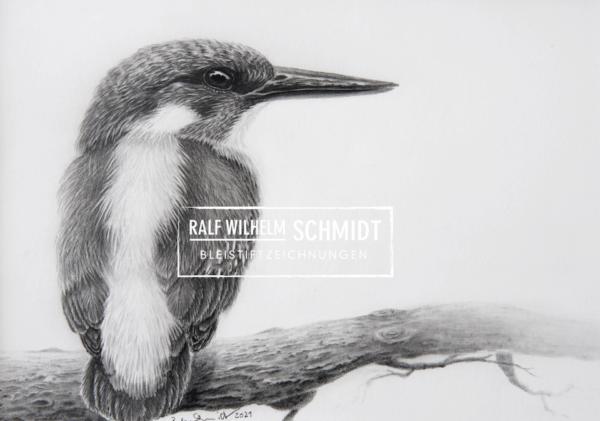 Eisvogel 3, Zeichnung