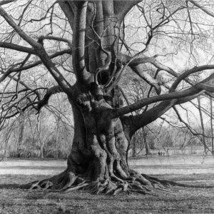 Bleistiftzeichnung Baum