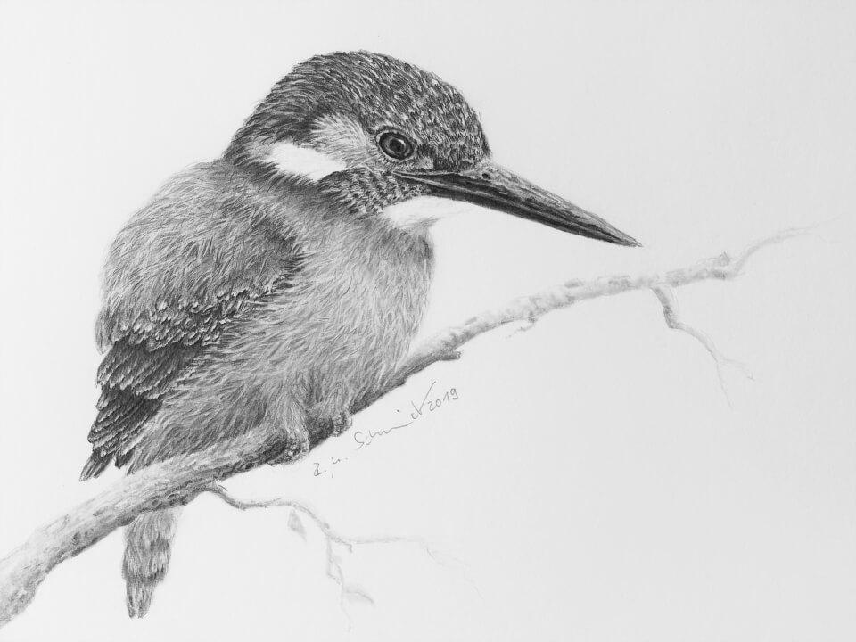 Eisvogel II, Kunstdruck