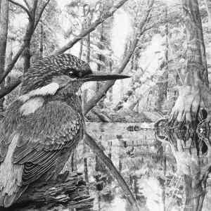 Original Bleistiftzeichnung vom Eisvogel
