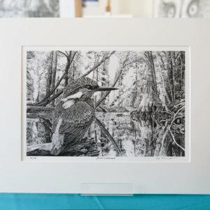 Eisvogel Fine Art Print