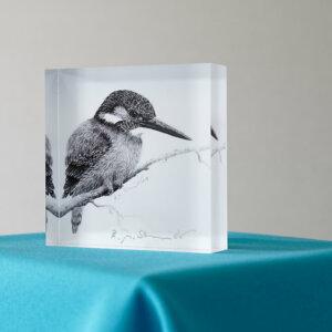 Eisvogel 2 Acrylblock