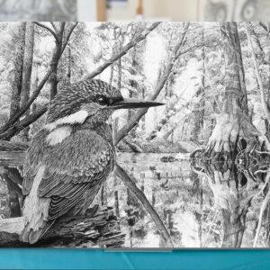 Eisvogel Dibond Print