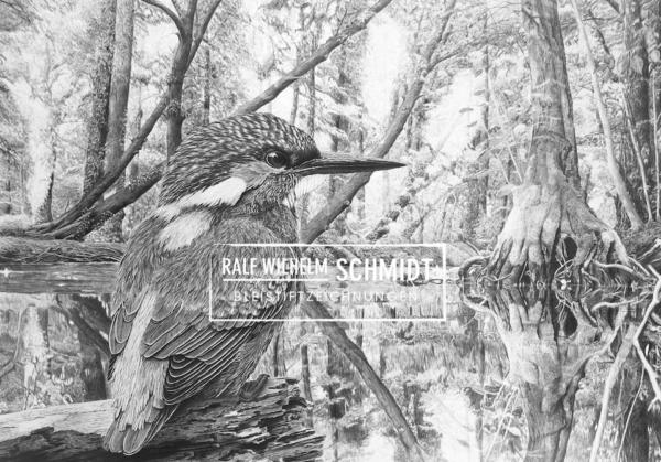 Eisvogel Zeichnung von Ralf Wilhelm Schmidt