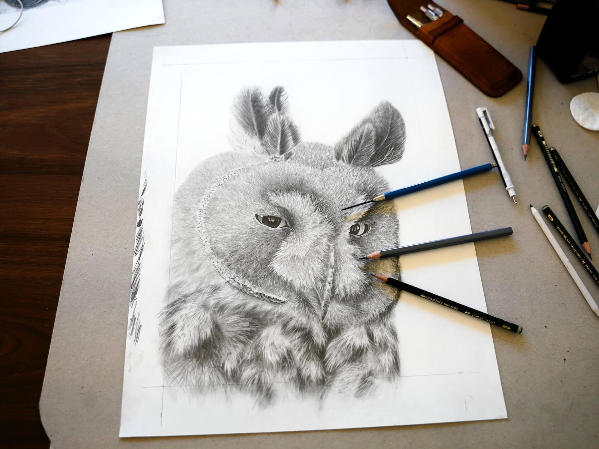 Waldohreule Bleistiftzeichnung