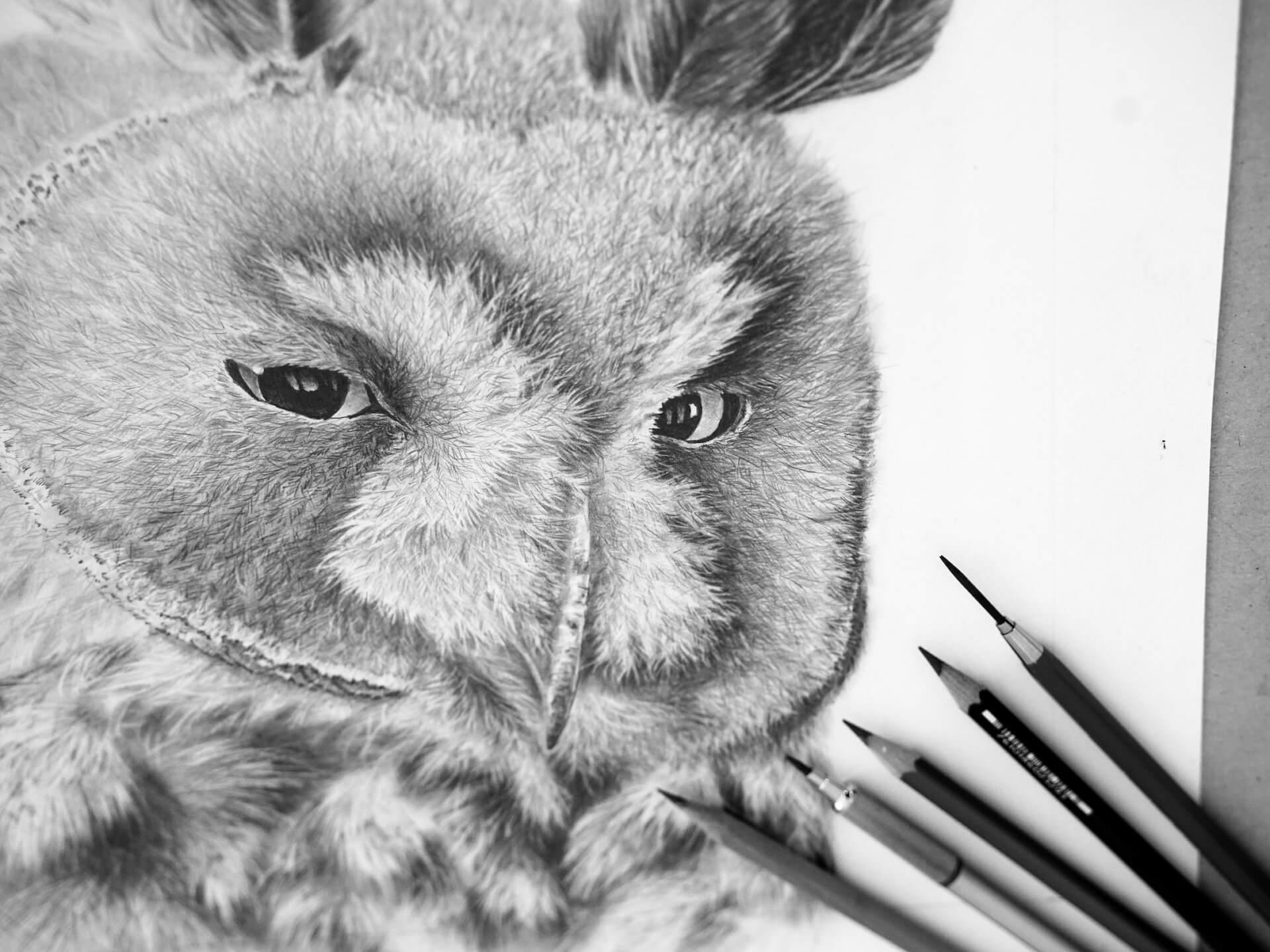 Bleistiftzeichnung Waldohreule