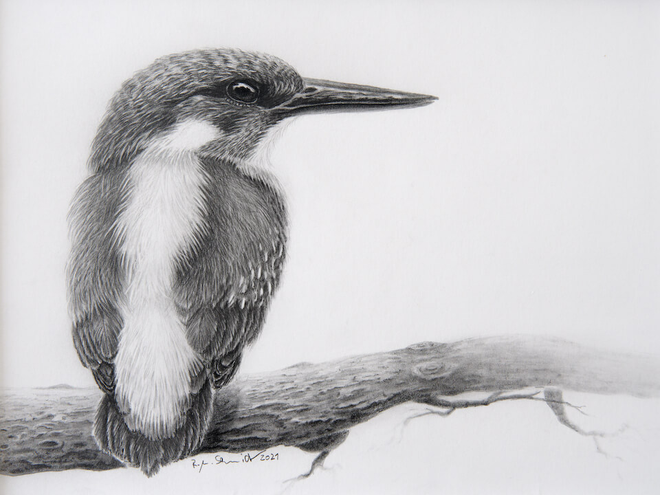 Eisvogel 3
