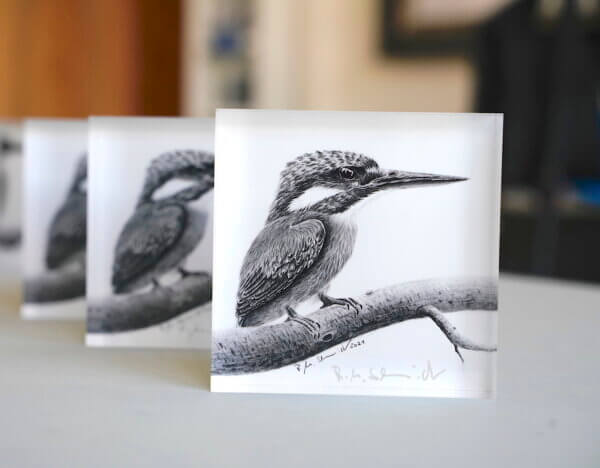 Eisvogel Ewald