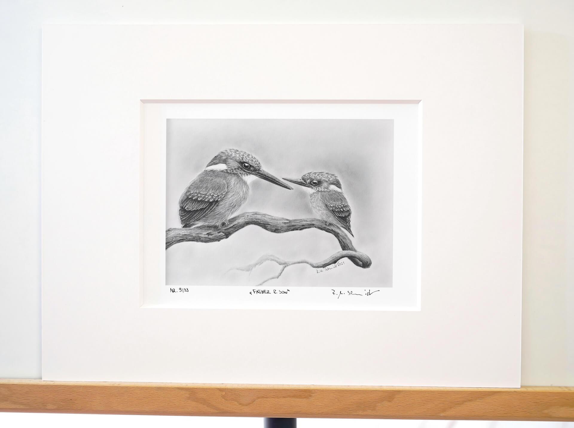 Eisvogel Bleistiftzeichnungen. von Ralf Wilhelm Schmidt
