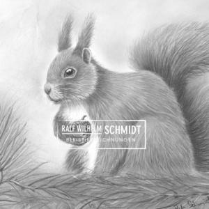 Zeichnung Eichhörnchen, Eichi 3, von rws von Ralf Wilhelm Schmidt