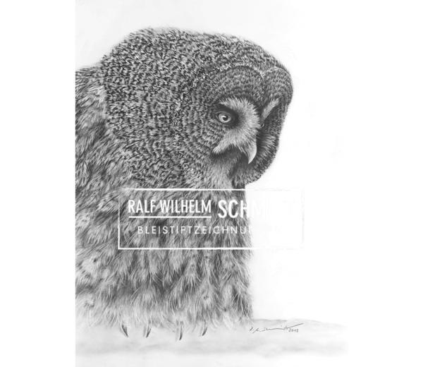 Eule Ede, Zeichnung von Ralf Wilhelm Schmidt