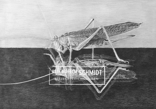 Zeichnung Grashüpfer von Ralf Wilhelm Schmidt