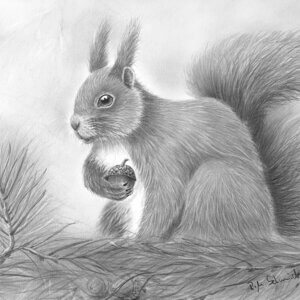 Zeichnung Eichhörnchen von Ralf Wilhelm Schmidt